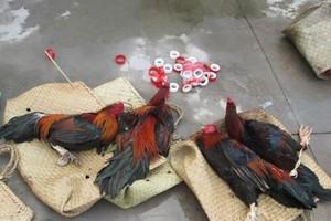 Miễn nhiệm chức vụ chi cục trưởng tổ chức đá gà tại cơ quan