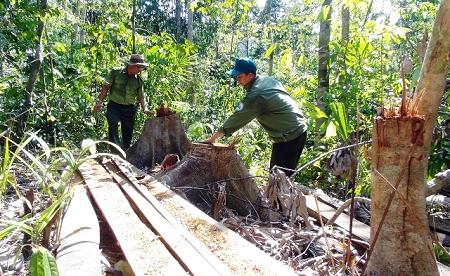 Vướng mắc trong thi hành án chủ động và thi hành án theo yêu cầu đối với một số vụ án liên quan đến tội hủy hoại rừng